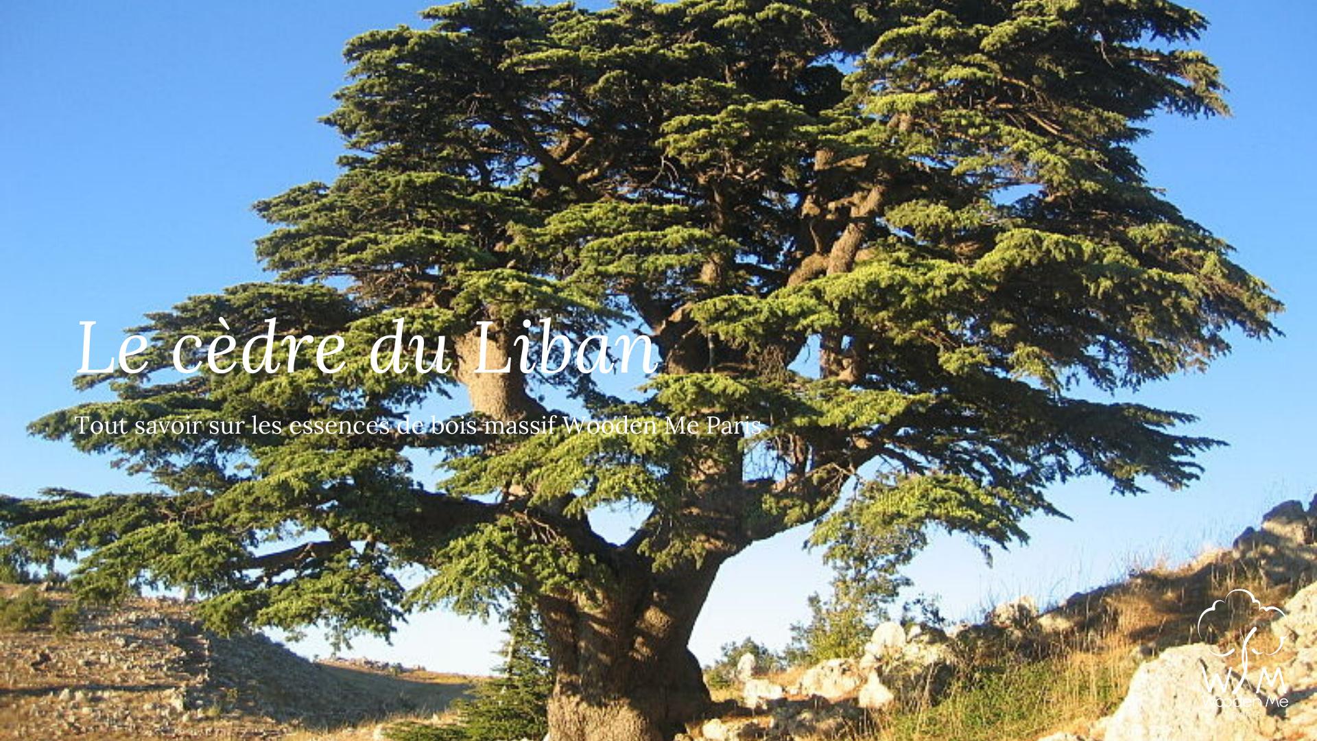 Tout savoir sur le cèdre du Liban